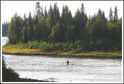 Fiska i Lainio älv