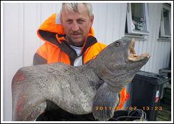 Välkommen till Widmarks Vildmarksfiske, havsfiske Norge